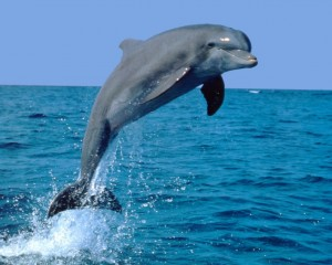 Делфин скача над водата