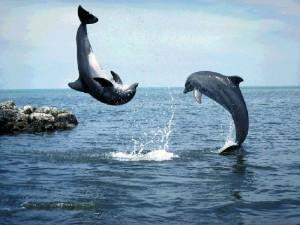 Делфини си играят
