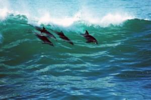 """Делфини """"яхнали вълната"""""""