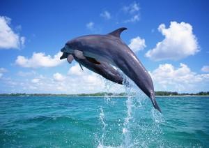 Делфини скачат над водата