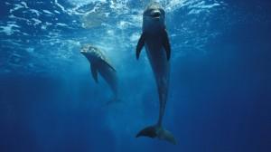 Делфини под водата